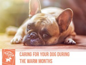 Dogs 46 - Caring for your dog during the warm months