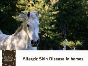 Horse 37 - Allergic Skin Disease in horses