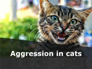 Cats 27 - Aggression in cats