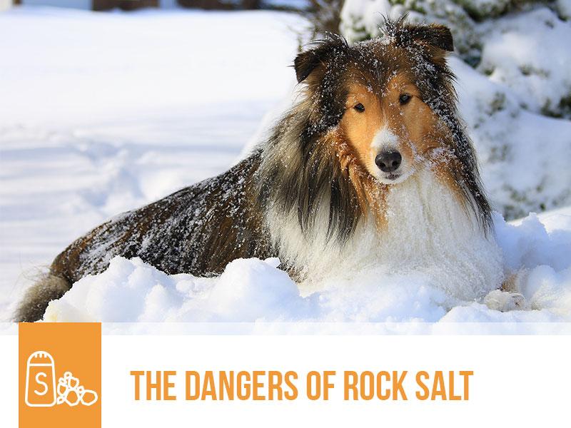 dogs-50-the-dangers-of-rock-salt